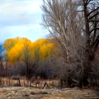 """New Mexico"", Taos, abstract, autumn, fence, foliage"