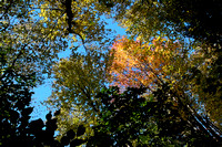 """High Ledges"", ""Massachusetts Audubon"", Shelburne, abstract, autumn, canopy, fall, foliage, ""tree tops"""