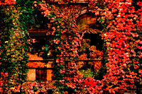 """Fall color"", Royalston, library, reflection, foliage, autumn, fall"