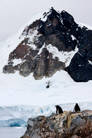 Antarctica, Gentoo, mountains, penguins